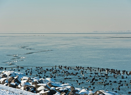 Birds in an ice hole along a dam photo