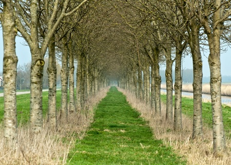 double reed: Double row of trees in winter Stock Photo