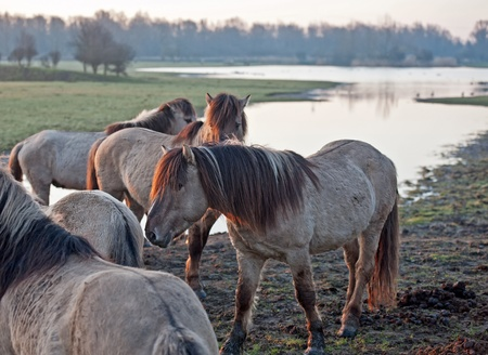 Wild horses in the light of sunrise Stock Photo - 12887126