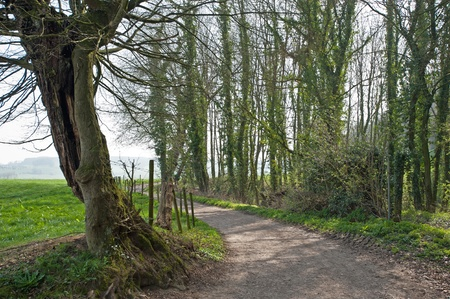 unblemished: Willow along a path in spring