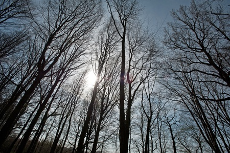 Sunset in a forest in spring Stock Photo - 12980796