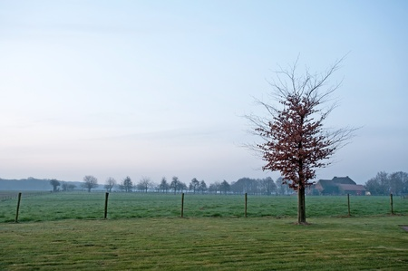 Tree in the light of sunrise in spring photo
