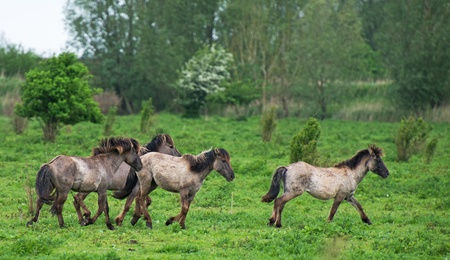 Playing horses in spring photo