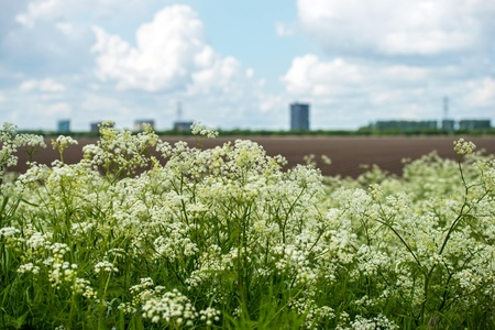 Wild flowers in a field in spring Stock Photo - 13626217