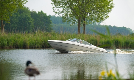 Duck looking at a speedboat in a canal