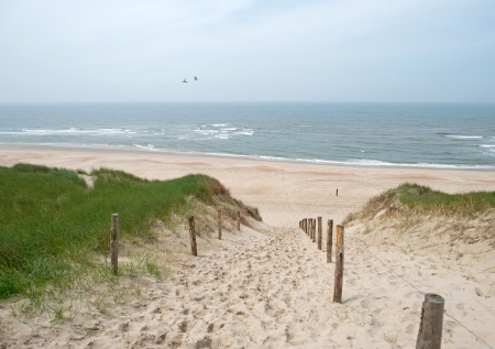 Seagulls flying along the beach photo