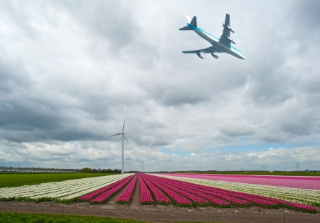 Plane flying over a field with tulips photo