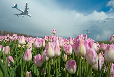 Aircraft flying over a field with tulips photo
