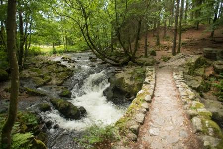 Stream through a sunlit forest photo