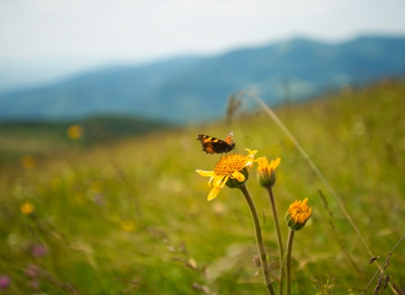 Butterfly on a flower in the sun Stock Photo - 14274869
