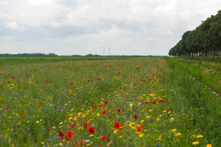 Wildflowers in a field in summer Stock Photo - 14407600