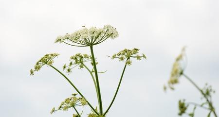 Wildflower in de zomer