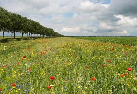 Wilde bloemen in een veld in de zomer