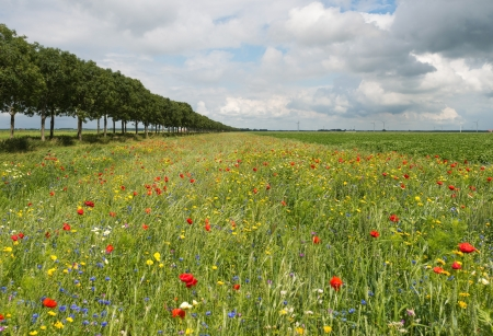 Wildflowers in a field in summer photo