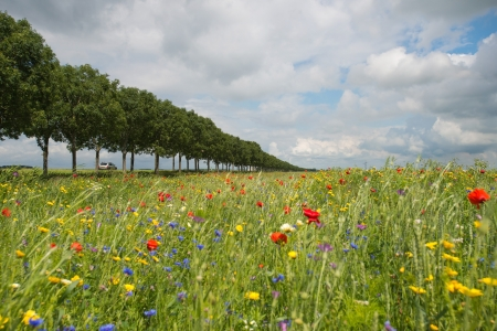 Wildflowers in a field in summer Stock Photo - 14445472