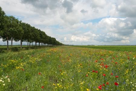 Wildflowers in a field in summer Stock Photo - 14445481