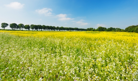 Wild flowers in a field in summer photo