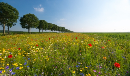 Wild flowers in a field in summer Stock Photo - 14595886