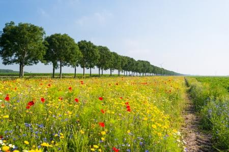 Wild flowers in a field in summer Stock Photo