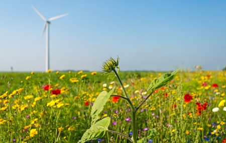Wild flowers in a field in summer Stock Photo - 14595865