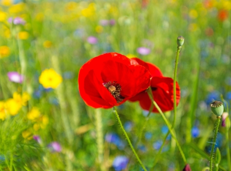 Wild flowers in a field in summer Stock Photo - 14595864