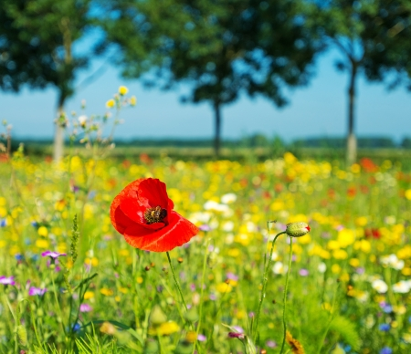 Wild flowers in a field in summer 스톡 콘텐츠
