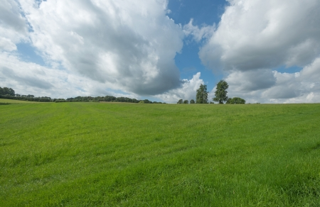 non cultivated: Rural landscape in summer
