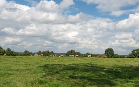 unblemished: Rural landscape in summer