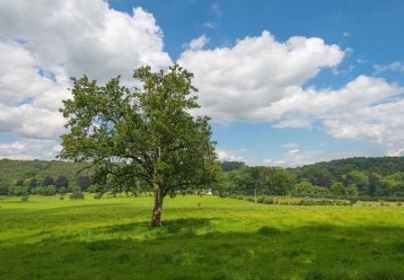 Rural landscape in summer photo