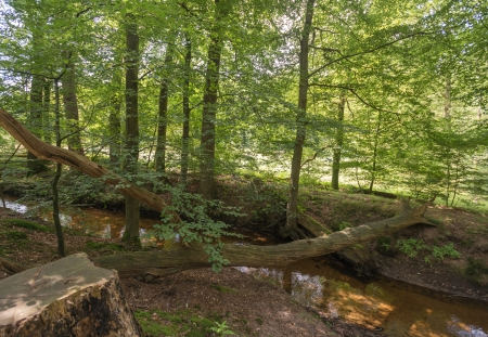 bourn: Fallen tree over a brook Stock Photo