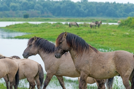 Horses walking along a lake in summer Stock Photo - 14870842