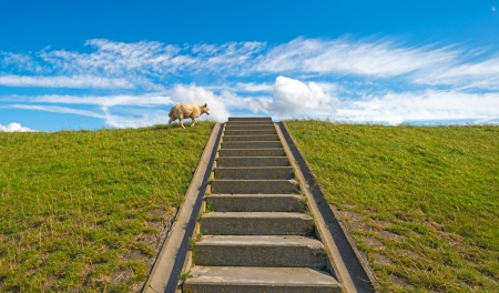 Sheep on a stairway in summer photo