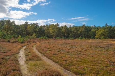 veluwe: Path through a rural landscape Stock Photo