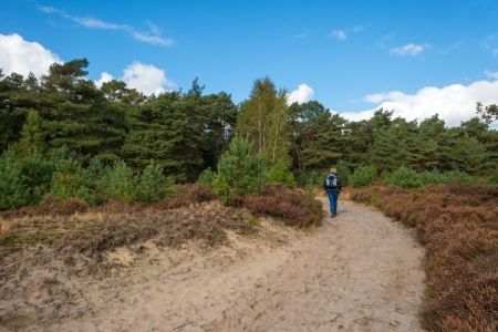 Path through heath and pines photo