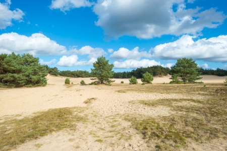 Sand and pines at fall Stock Photo - 15630719