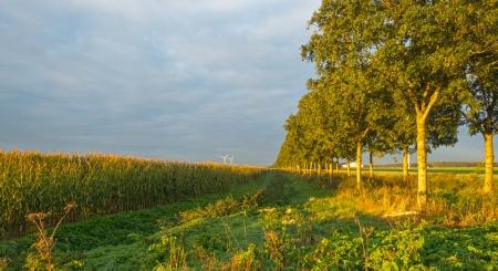 Corn in sunlight at dawn in autumn Stock Photo - 15738083
