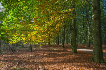 Indian summer at fall Stock Photo - 15933900