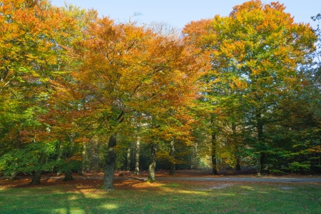Indian summer in a forest at fall