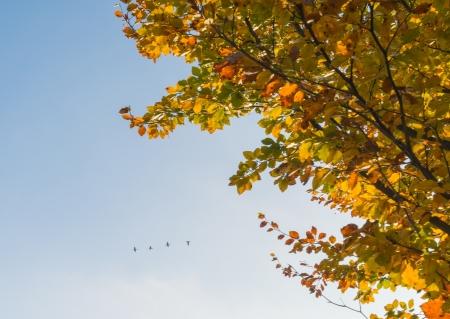 Tree in autumn at sunrise Stockfoto