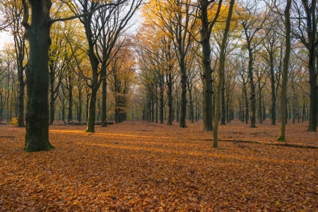 Colorful forest at fall Stock Photo - 16298838