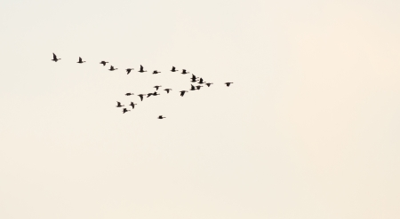 Flock of flying birds photo