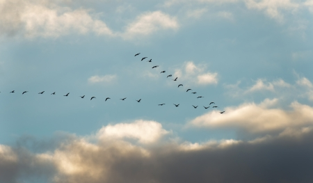Birds flying into deteriorating weather photo