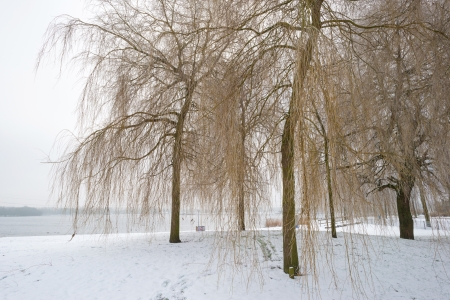 Trees in a snowy park along a lake Stock Photo - 17376865