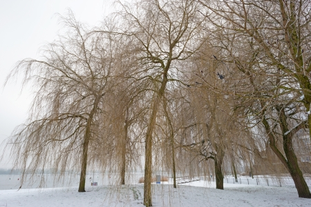 Trees in a snowy park along a lake photo