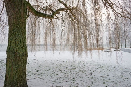 Trees in a snowy park along a lake Stock Photo - 17376847