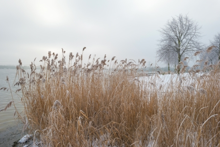 Reed along a snowy shore Stock Photo - 17376532
