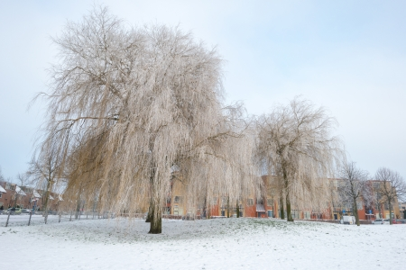 Trees covered with hoarfrost in winter photo