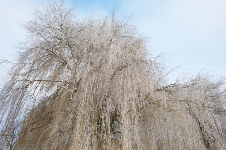 Trees covered with hoarfrost in winter Stock Photo - 17376857