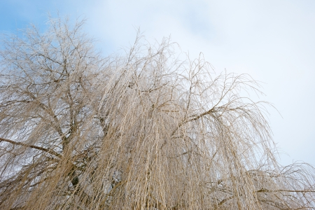 Trees covered with hoarfrost in winter Stock Photo - 17376863