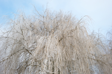 Trees covered with hoarfrost in winter Stock Photo - 17376851